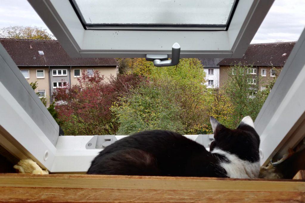 nähzimmerupgrade Katze im Fenster